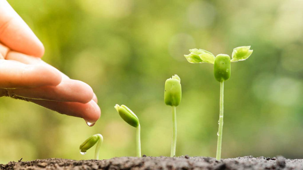 Mindfulness - Getting Started: image of a water drop on a finger falling onto a sprouting plant