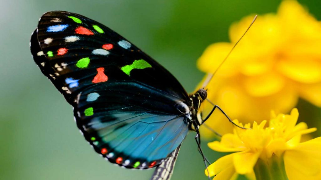 Uncertain About Booking? - Children & Teens: closeup image of a blue butterly on yellow flowers