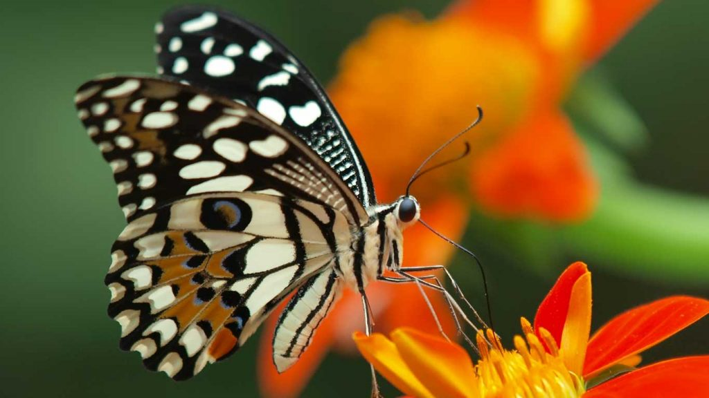 Services - Children & Teens - Difficult Habits & Repetitive Behaviours: closeup image of butterfly on orange flower