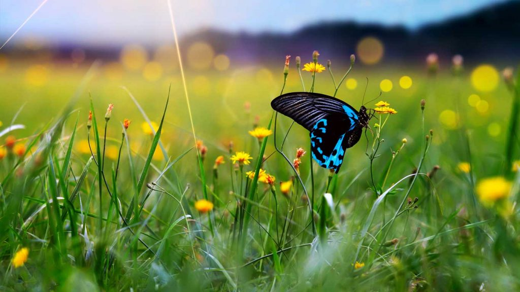 Services - Children & Teens - Stress & Anxiety: image of butterfly over a field of wildflowers
