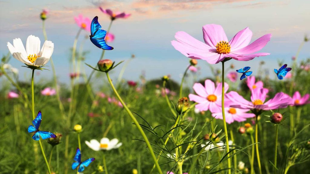 Services - Children & Teens - Attention & ADHD: image of blue butterflies in a field of wildflowers