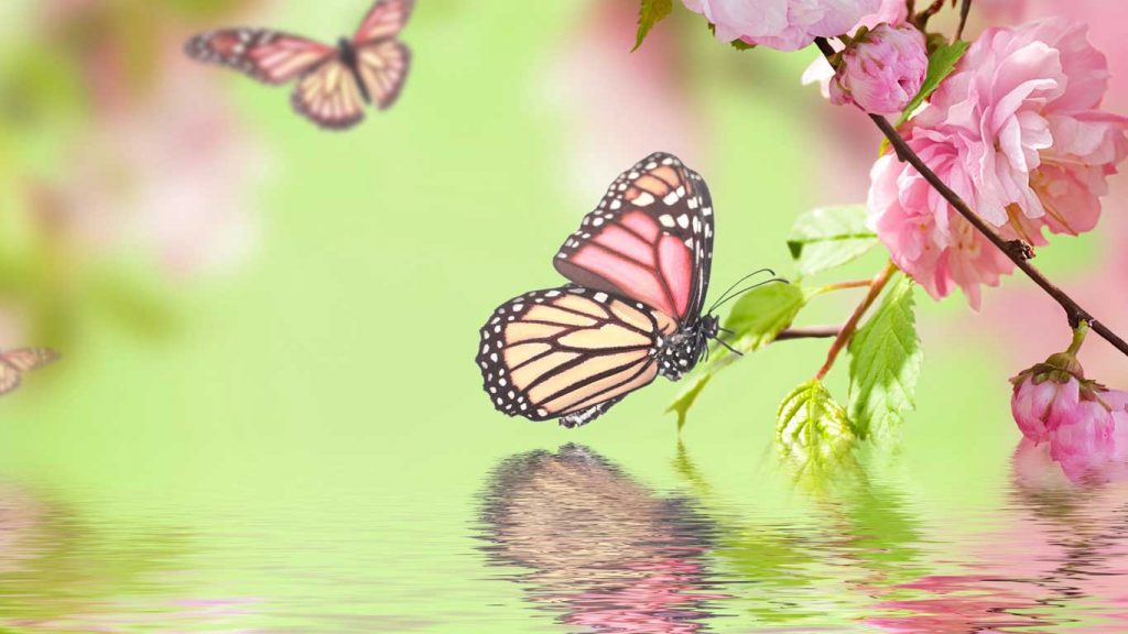 Services - Children & Teens - Insomnia: image of butterflies among pink flowers over water