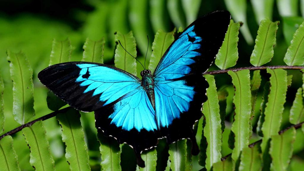 Services - Children & Teens - Low Self-Confidence: image of an iridescent blue butterfly on a fern