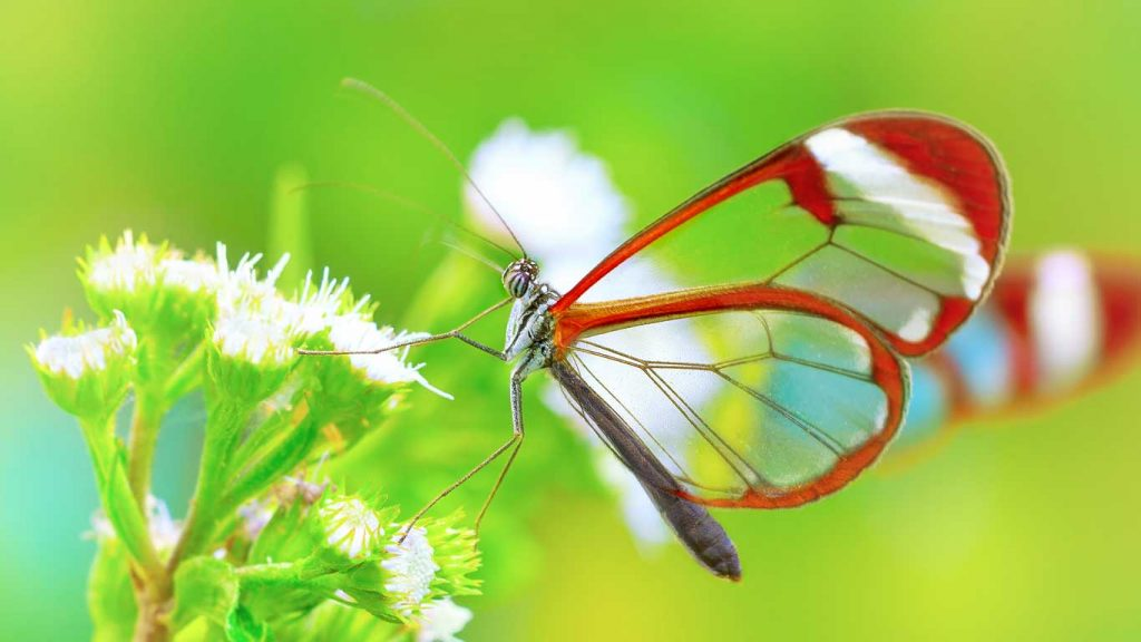 Services - Children & Teens - Challenging Peer & Family Relationships: image of a butterfly on a flower