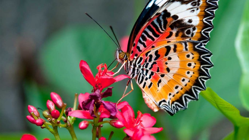 Final Session - Children & Teens: closeup image of monarch butterfly on red flower